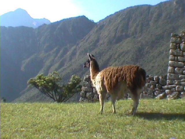 Peru and Bolivia