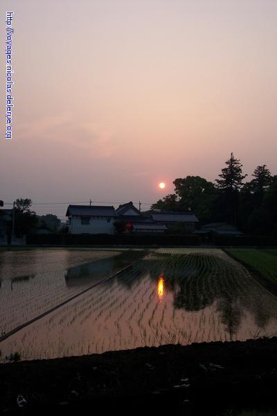 夕日の映る水田